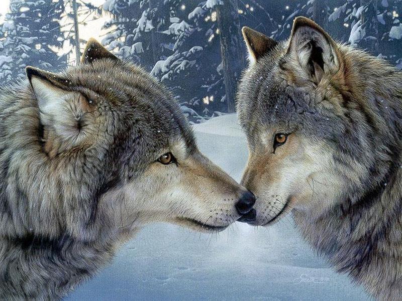 Les deux loups.